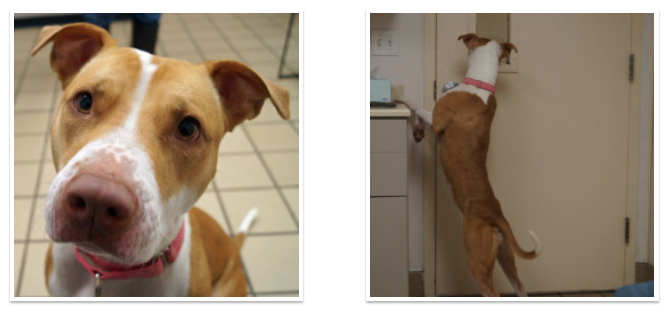 Venus is up for adoption at the Monmouth County SPCA Photo/screenshot of SPCA website