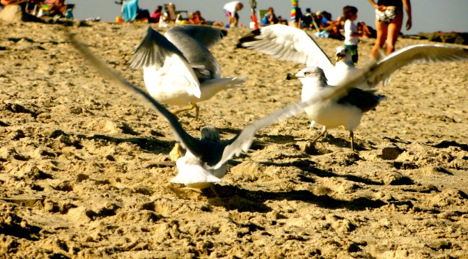 Sea Bright: The Gulls on the Beach