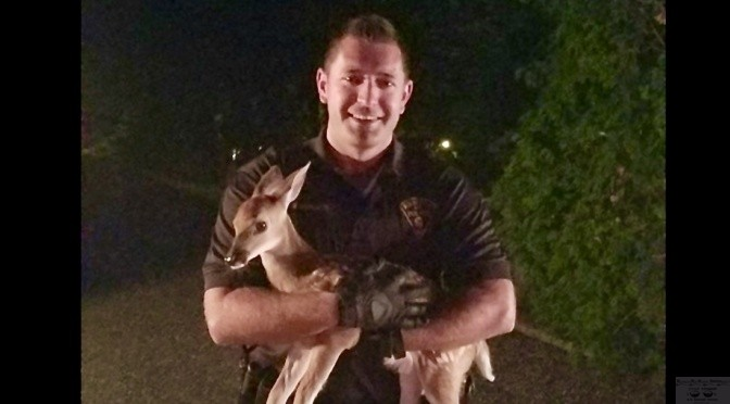 Oh, Deer! A Rumson PD Rescue
